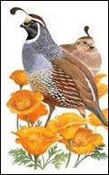 quail-and-manna